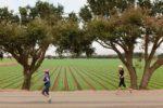 Salinas Half Marathon 2017